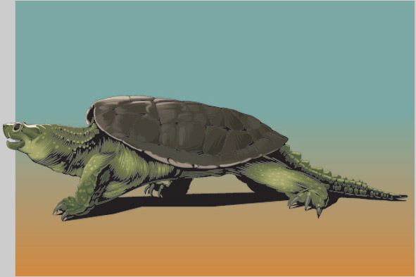 Snapping Turtle illustration